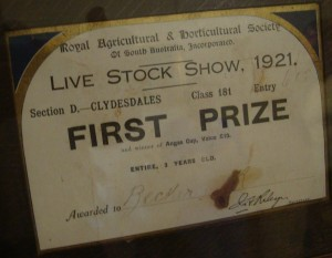 Clydesdale certificate